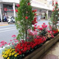 5月27日:2017年小岩フラワーロード花壇コンクールです。