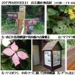 2017.6.10(土)自主巡回活動/山内~奥高尾【奥高尾~小下沢林道巡視】