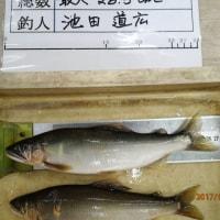 菊池川アユ釣りの近況