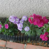 散文詞 ; 花の精