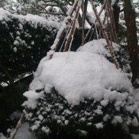 やっと降り出した雪