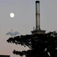 昨夜の月と鳥。