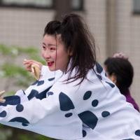 2017踊っこまつり  5月3日 本部競演場 宍粟牛っとまつりPR隊2