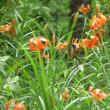 花のリレー
