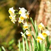 蝶々もお花もワンコも春
