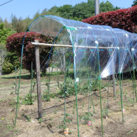 トマトの屋根製作!