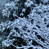 大雪の被害。