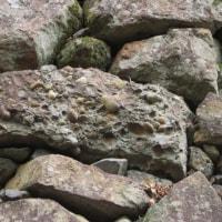 洲本城跡の石垣を視る「さざれ石?」