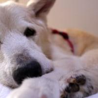 愛犬まるの大好物