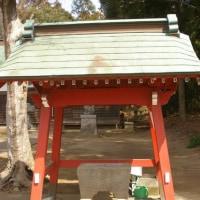 千葉県多古町、次補惣態神社のスダジイです!!