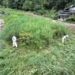 鎮西区 南の沢川の草刈り