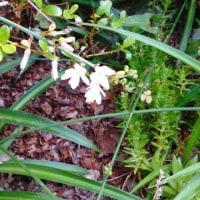 6月24日の花