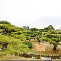 もうすぐ春ですね。高松市観光大使から3月定例レポート。    その1 栗林公園、屋島頂上など。