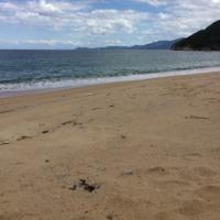 今夏二度目の追浜