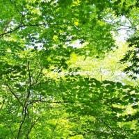 軽井沢へ・・・ 6月の新緑が最高だったよ!