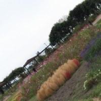 仙台市農業園芸センター ☆