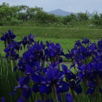 生育維持に感謝・NPO法人「長万部町緑と樹を愛する会」
