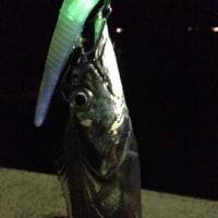 芦北・ひっさ久のタチウオ釣り