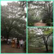 神戸森林植物園へ