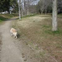 三連休のなかびの散歩はロングコース