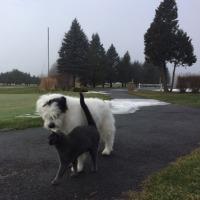 2日連続で犬猫散歩に出られた暖かい土曜日