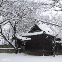 味噌作りのために、大雪の日に大豆の選別作業に勤しむ。昼餉はおしぼりうどん(妻女山里山通信)