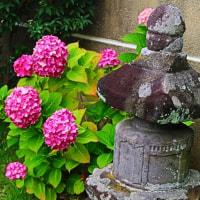 『寺社の紫陽花』 虎女供養塔