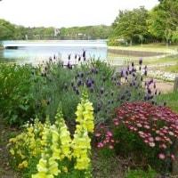 長居植物園 3