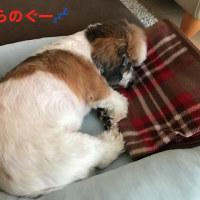 番犬、織。