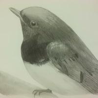 鳥のデッサン