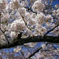 駒ヶ根の春⑥