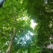 お茶の水  ~歩きたい緑の小径