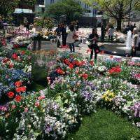 心地良いみどり  横浜    開港広場