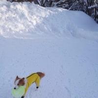 雪はどこへ行った?