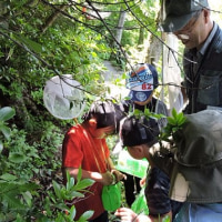 【6月22日更新】八幡平ビジターセンター 8月のイベント情報!