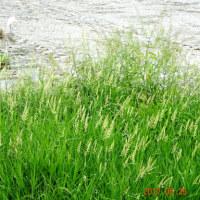 5月の水辺