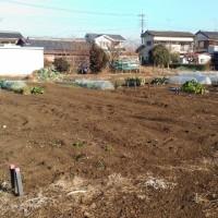 今日の畑(2017年1月22日)