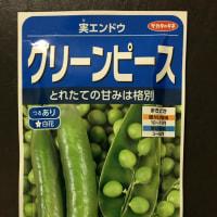 < そら豆 > と < 実えんどう > を蒔きました \(^o^)/