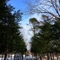 野鳥観察 今年度最後?!~北大苫小牧研究林~