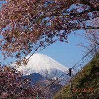 写真で見る桜、長かった開花時期ー花見疲れというぜいたく!ー