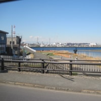 鶴見川河川岸伐採処理