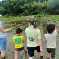 自然栽培の田植え体験会