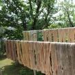 櫻工房の庭木で染める