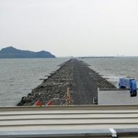 曽根干潟(北九州市小倉南区)カブトガニ大量死の不思議