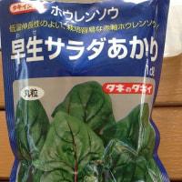 サラダホウレンソウ種蒔き