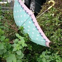 かわいい傘