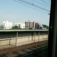 マイペース  東京