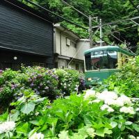 「御霊神社~極楽寺」/鎌倉(2017初夏)