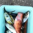 午前夏、夏休みプランでマアジ釣りです。