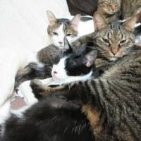 猫と日本ダービー記念日